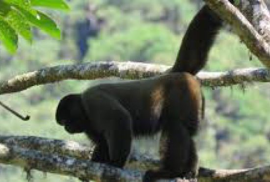 What Does Monkey Island Do?